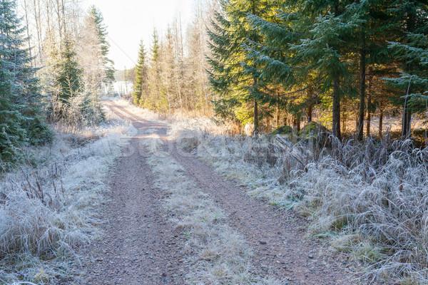 Rural dirt road and rime  Stock photo © Juhku