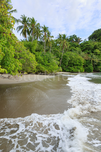 Playa Costa Rica arena árboles forestales paisaje Foto stock © Juhku
