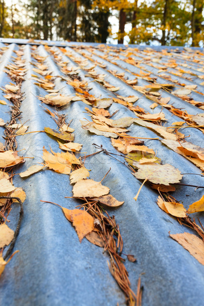 Foto stock: Hojas · de · otoño · techo · metal · textura · resumen · naturaleza