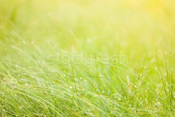 Streszczenie wilgoć trawy rosa charakter świetle Zdjęcia stock © Juhku