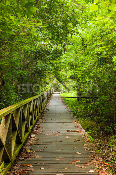 Boardwalk in dense rainforest Stock photo © Juhku