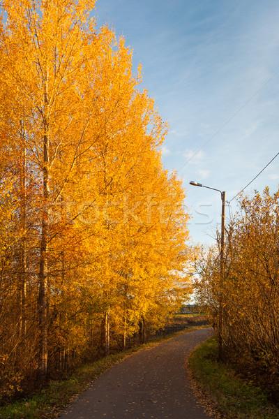 Road and colorful autumn foliage Stock photo © Juhku