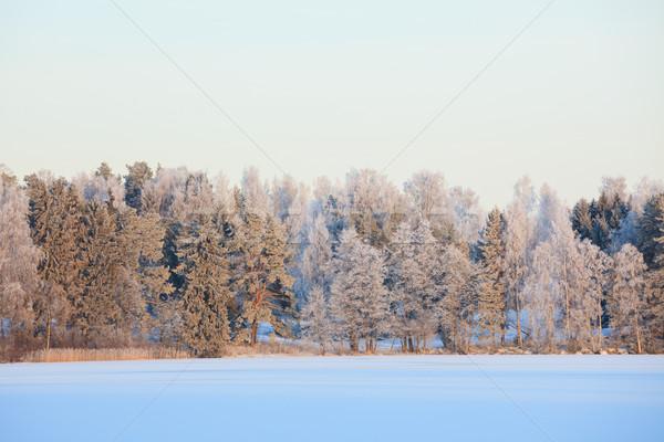 Zimą jezioro dekoracje Finlandia wieczór lasu Zdjęcia stock © Juhku