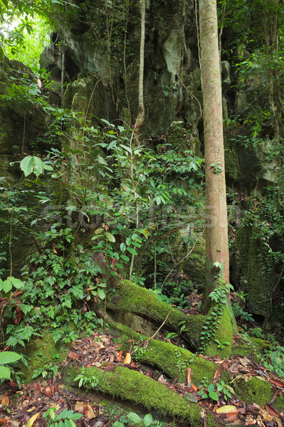 Stone cliff in rainforest Stock photo © Juhku