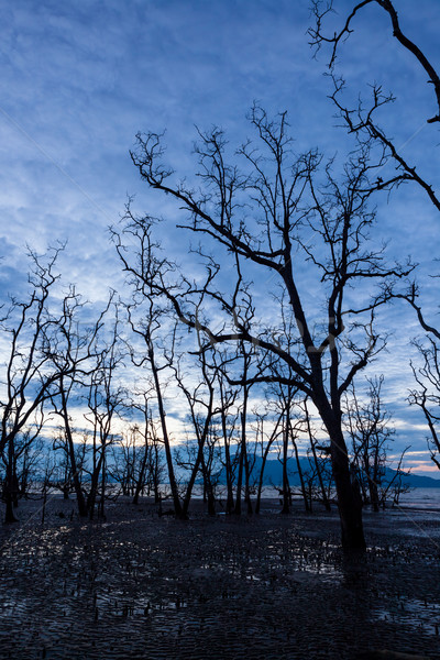 Dead forest at muddy beach at twilight Stock photo © Juhku