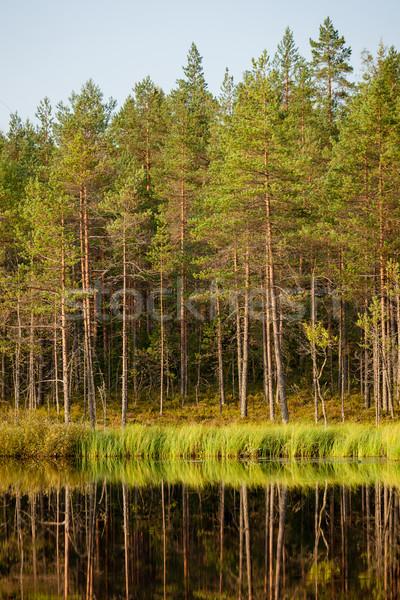 Spokojny słoneczny rano lasu refleksji Finlandia Zdjęcia stock © Juhku