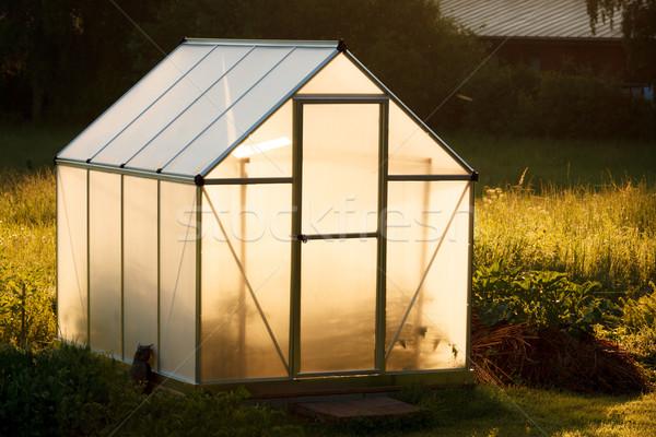 Kicsi üvegház udvar étel természet fény Stock fotó © Juhku