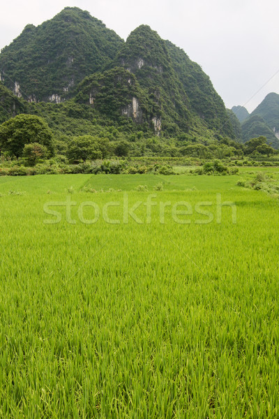 Rice fields and karst mountains landscape china Stock photo © Juhku