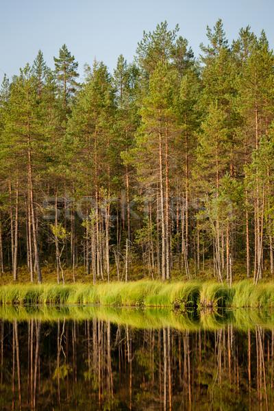 Sereno soleado manana forestales reflexión Finlandia Foto stock © Juhku