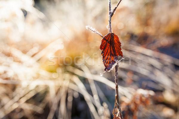 Rood blad vorst weide abstract Stockfoto © Juhku
