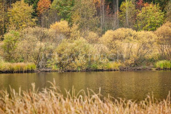 Bella autunno panorama piccolo lago albero Foto d'archivio © Juhku