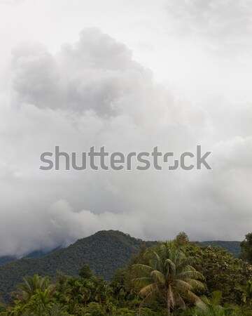 Stormy cloud in gunung mulu national park Stock photo © Juhku