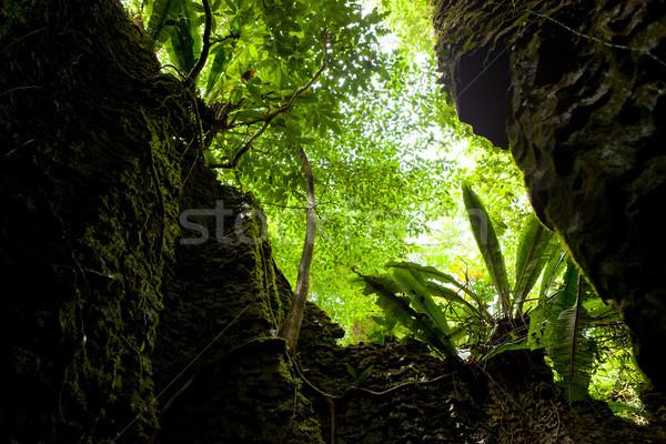 Naturale muro di pietra foresta albero natura rock Foto d'archivio © Juhku