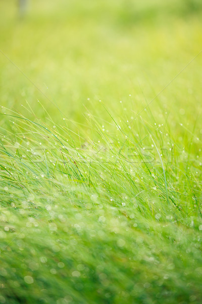 Abstract moisture grass background Stock photo © Juhku