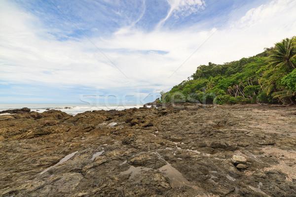 ビーチ 木 水 森林 背景 海 ストックフォト © Juhku
