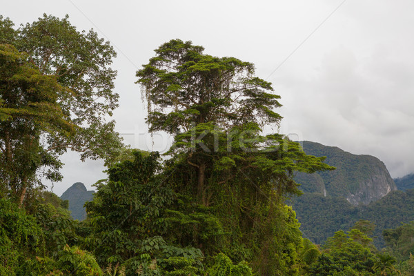 Exotic rainforest landscape Stock photo © Juhku