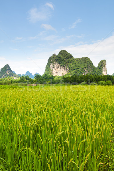 rice fields and karst mountains in southern china Stock photo © Juhku