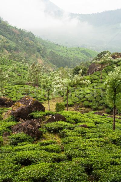 Munnar tea plantations india Stock photo © Juhku