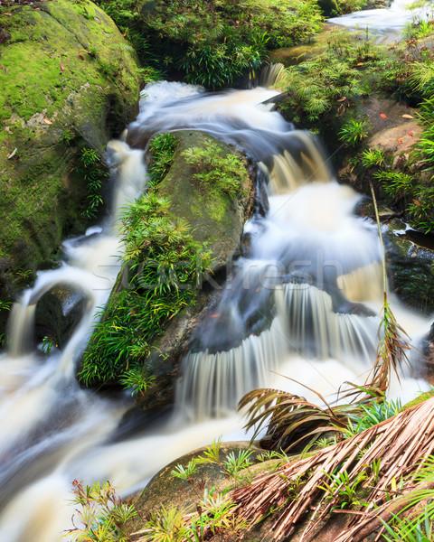 Klein waterval jungle park Maleisië borneo Stockfoto © Juhku