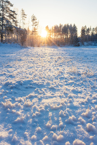 Grassland field at winter Stock photo © Juhku