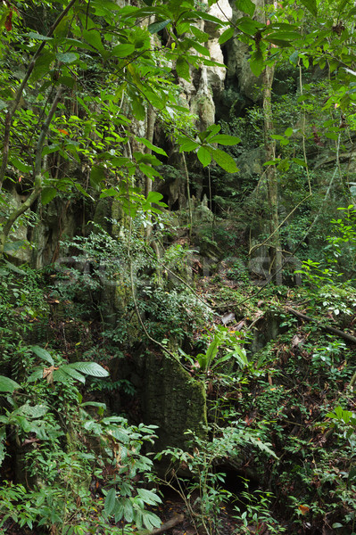 Stone cliff in rainforest Stock photo © Juhku