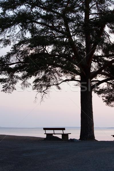 Eenzaam bank groot boom silhouet landschap Stockfoto © Juhku