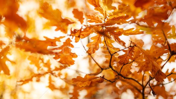 葉 黄色 抽象的な 森林 レトロな ストックフォト © Juhku