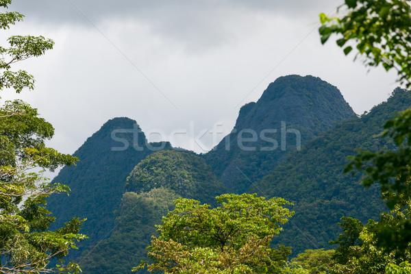 Egzotik Rainforest manzara park borneo Malezya Stok fotoğraf © Juhku
