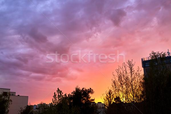 Beautiful sunset sky and tree silhouettes Stock photo © Juhku