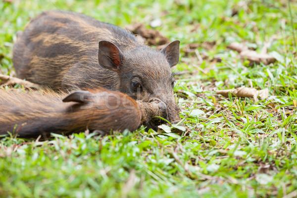 ребенка спальный трава природы зеленый Сток-фото © Juhku