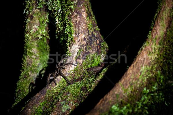 Spider Борнео леса ночь ног джунгли Сток-фото © Juhku