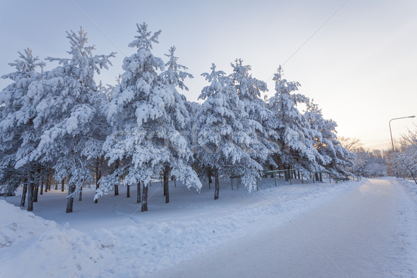 Stock photo: Trees snow and road at sunrise