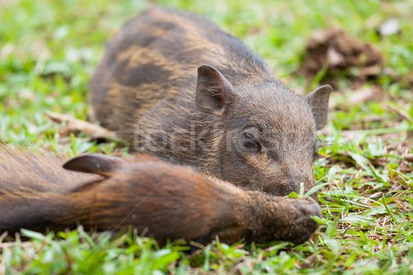 ребенка спальный трава волос молодые Сток-фото © Juhku