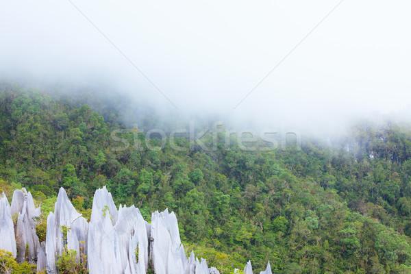 Limestone pinnacles at gunung mulu national park Stock photo © Juhku