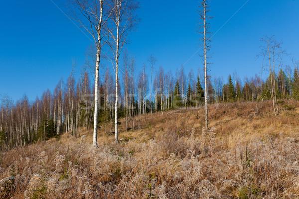 Gyönyörű erdő legelő friss napos idő napos Stock fotó © Juhku