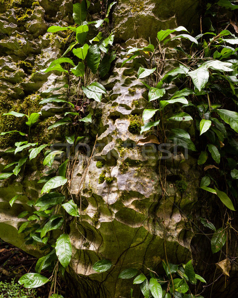 Stone boulder details in rainforest Stock photo © Juhku