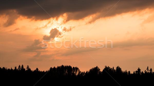 Ateşli gün batımı siluet orman bulutlu doğa Stok fotoğraf © Juhku