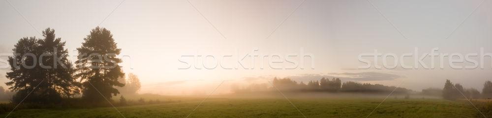 туманный луговой рассвета пейзаж лес свет Сток-фото © Juhku