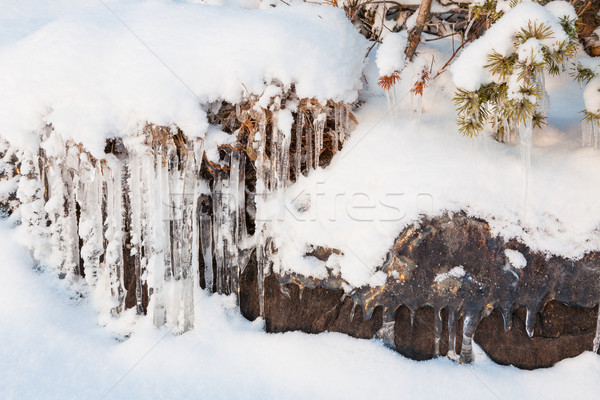 Beautiful icicle ice formation on small tree Stock photo © Juhku