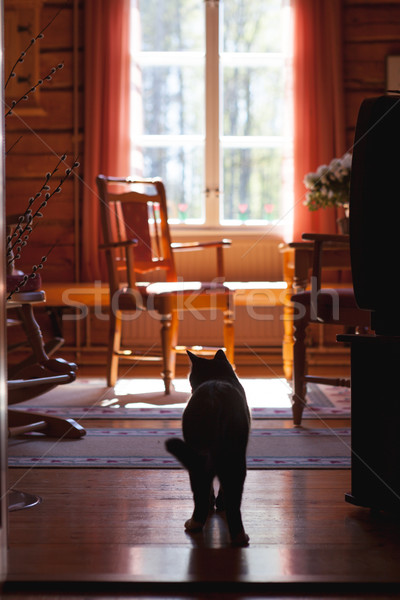 Kat deuropening woonkamer home venster Stockfoto © Juhku