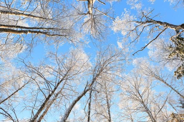 Sneeuw gedekt boom perspectief Stockfoto © Juhku