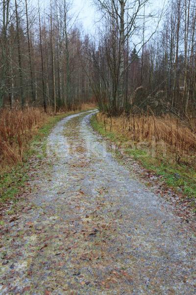 небольшой лес дороги Финляндия заморожены пейзаж Сток-фото © Juhku