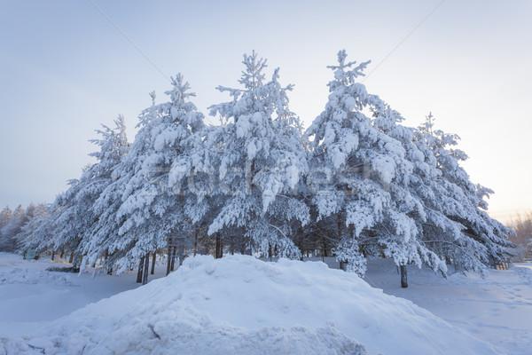 Trees snow and road at sunrise Stock photo © Juhku