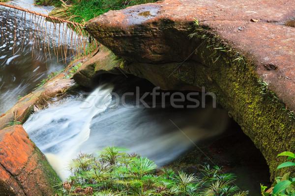 Small stream in jungle Stock photo © Juhku