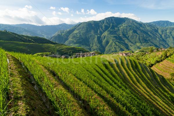 Longsheng rice terraces guilin china landscape Stock photo © Juhku