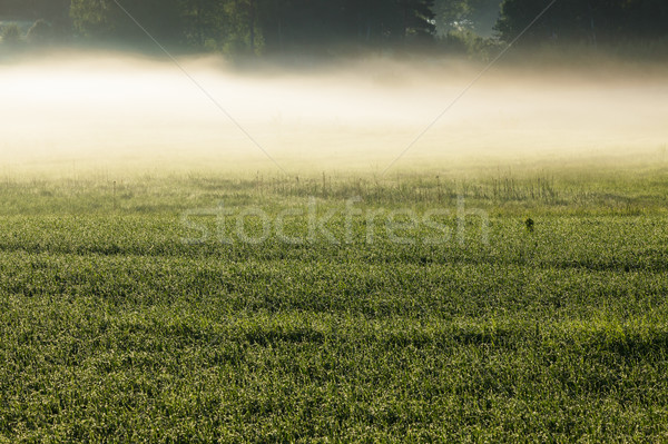 Sabah sis çayır gökyüzü orman Stok fotoğraf © Juhku