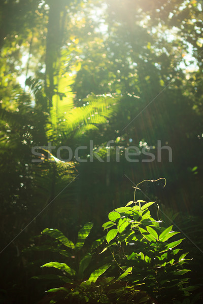 Small plant growing in rainforest Stock photo © Juhku