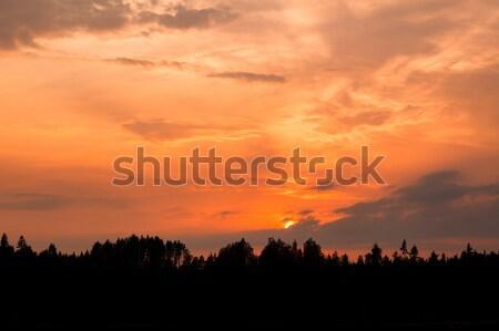 Ardiente puesta de sol silueta forestales nublado nubes Foto stock © Juhku