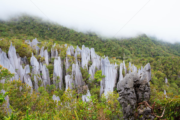 Limestone pinnacles at gunung mulu national park Stock photo © Juhku