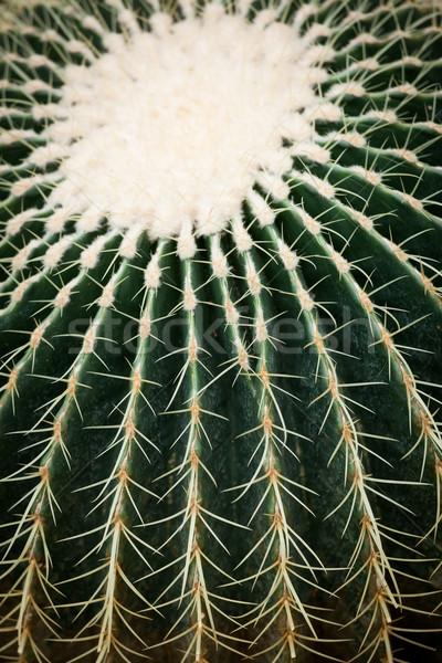 Cactus spikes closeup Stock photo © Juhku